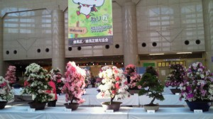 20120523アトリウム皐月展
