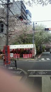 H25.03.30東通り桜受付